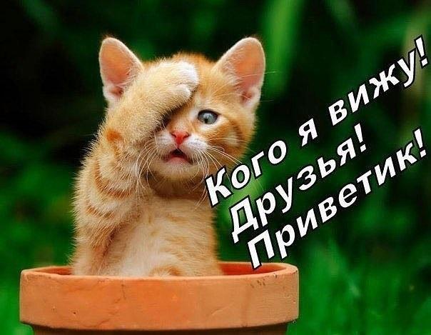 Фото с надписью всем привет (1)