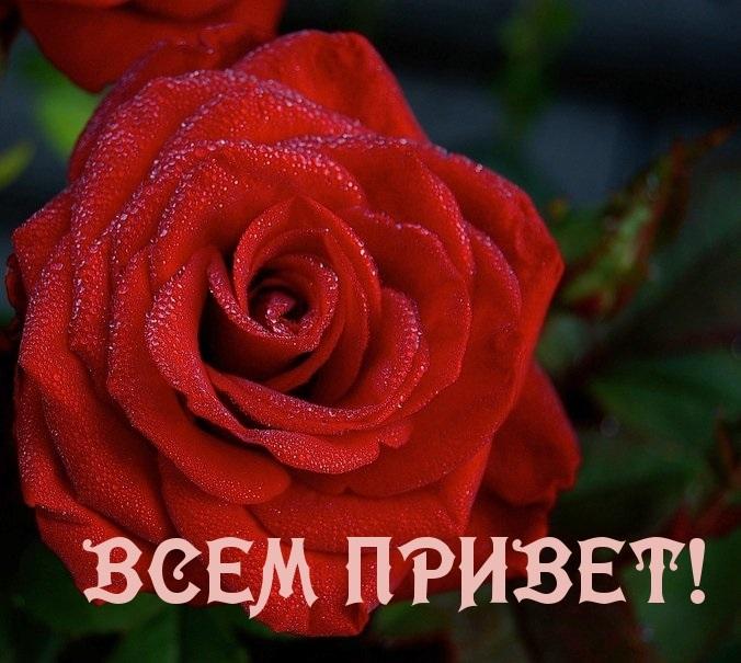 Фото с надписью всем привет (13)