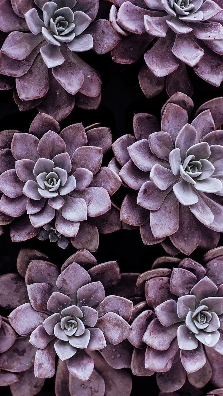 Цветы на заставку телефона фото и обои (10)