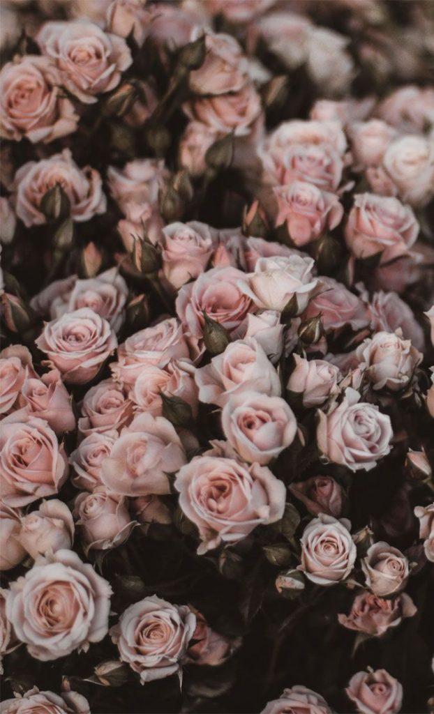 Цветы на заставку телефона фото и обои (12)