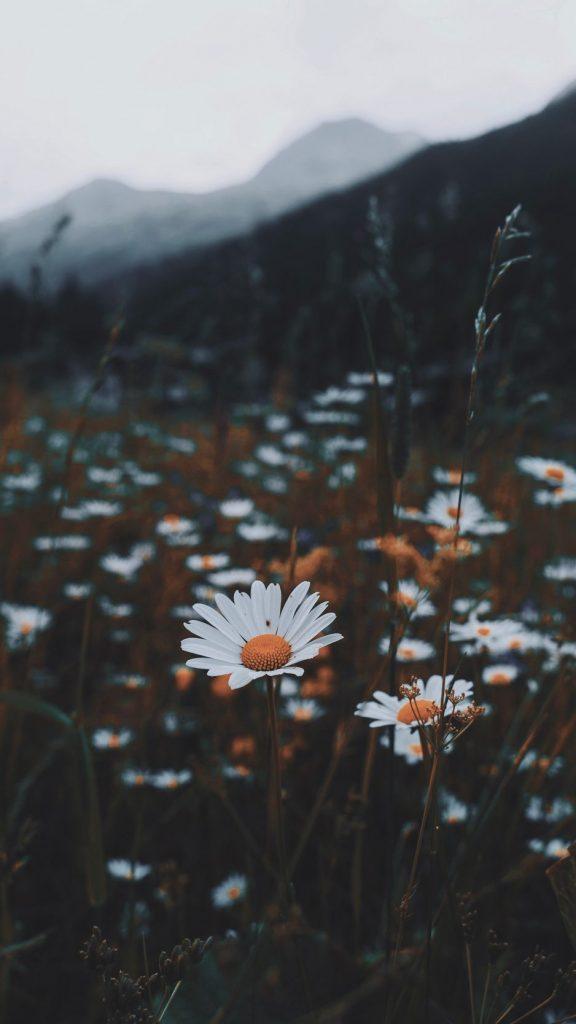 Цветы на заставку телефона фото и обои (14)