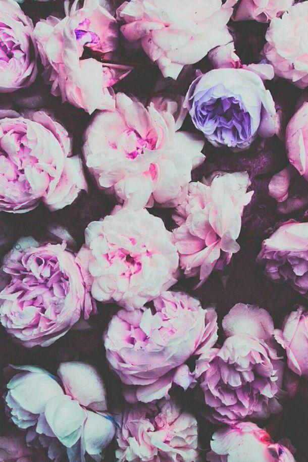 Цветы на заставку телефона фото и обои (15)