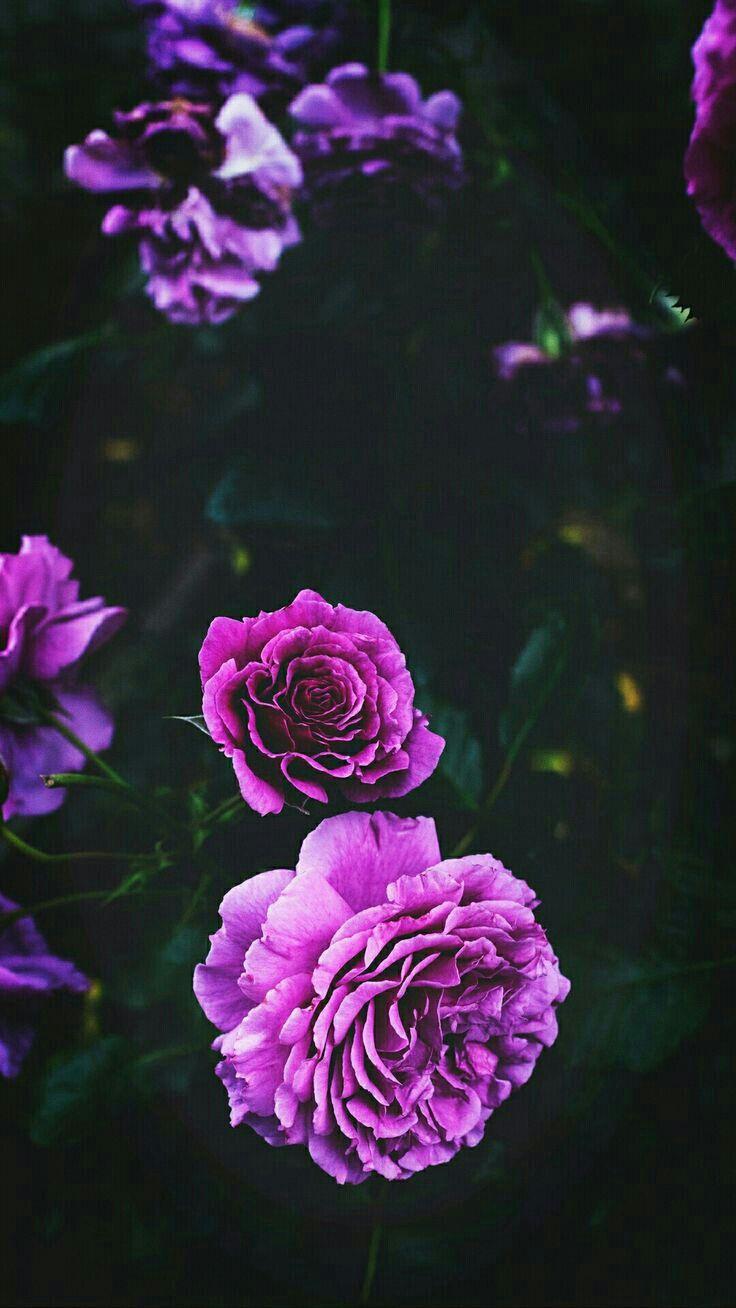 Цветы на заставку телефона фото и обои (16)