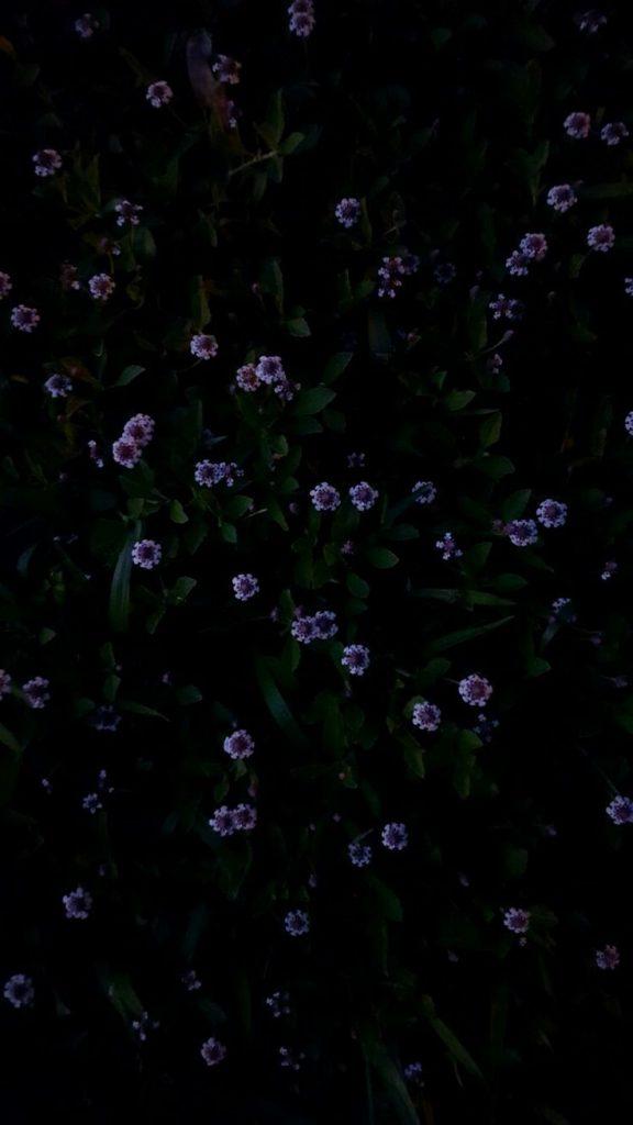 Цветы на заставку телефона фото и обои (2)