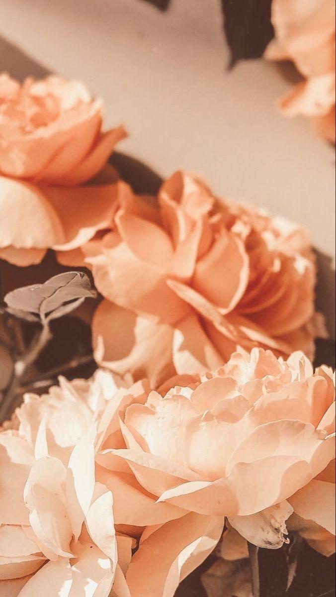 Цветы на заставку телефона фото и обои (21)