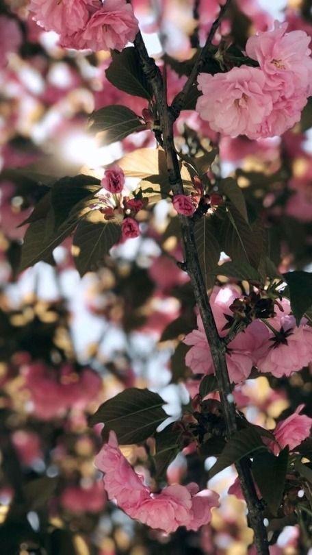 Цветы на заставку телефона фото и обои (3)