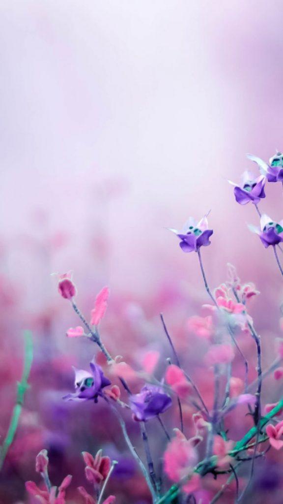 Цветы на заставку телефона фото и обои (4)