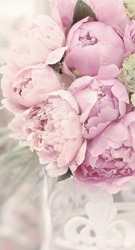 Цветы на заставку телефона фото и обои (5)