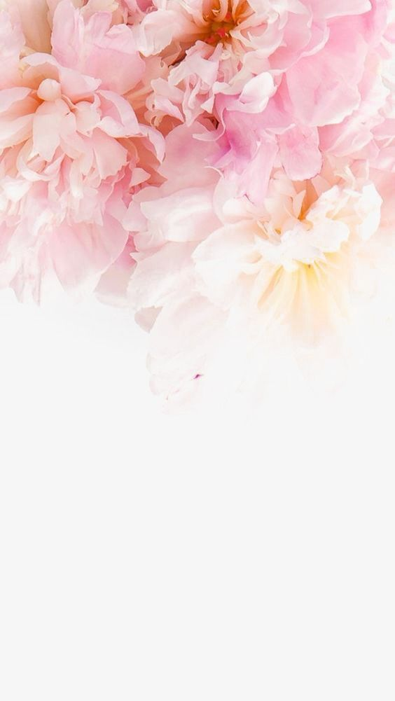 Цветы на заставку телефона фото и обои (6)
