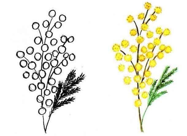 Цветы рисунок для детей карандашом (1)