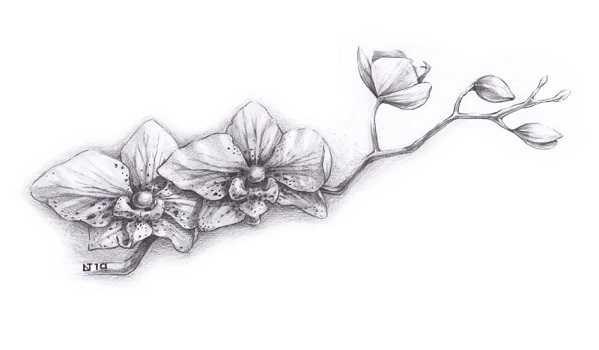 Цветы рисунок для детей карандашом (11)