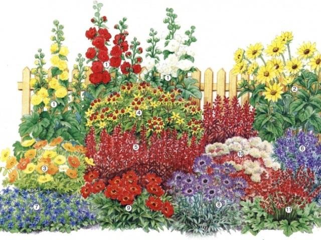 Цветы рисунок для детей карандашом (12)