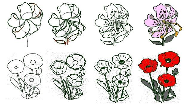 Цветы рисунок для детей карандашом (13)