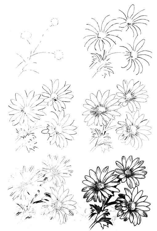 Цветы рисунок для детей карандашом (14)