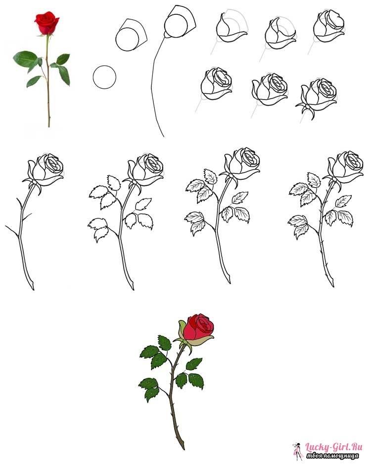 Цветы рисунок для детей карандашом (15)