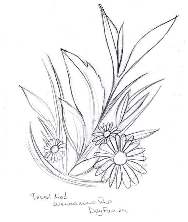 Цветы рисунок для детей карандашом (16)