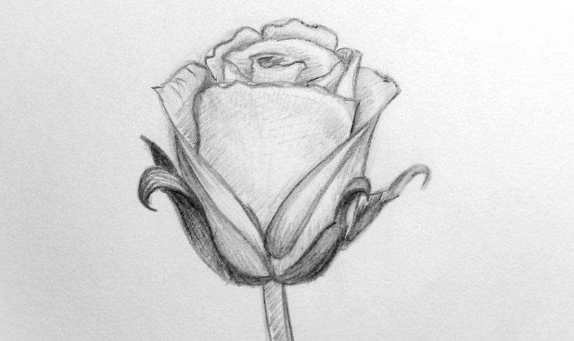 Цветы рисунок для детей карандашом (17)