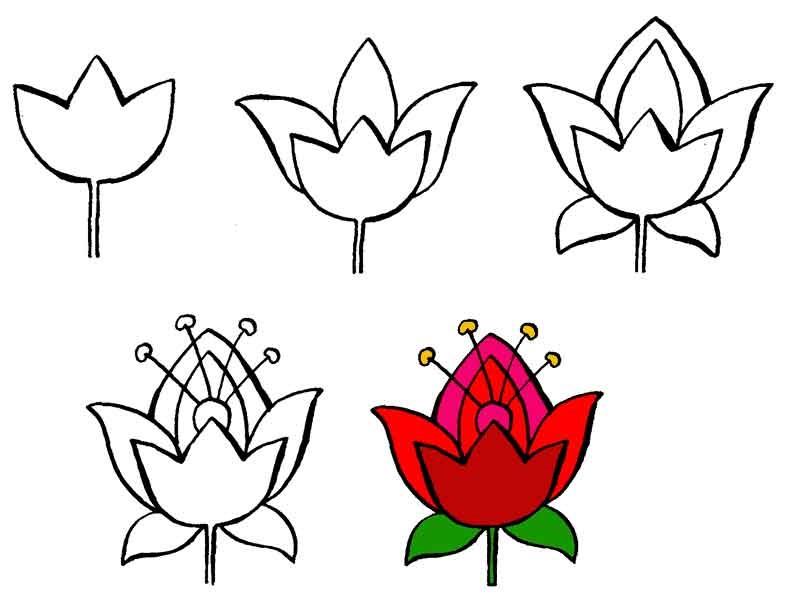 Цветы рисунок для детей карандашом (18)