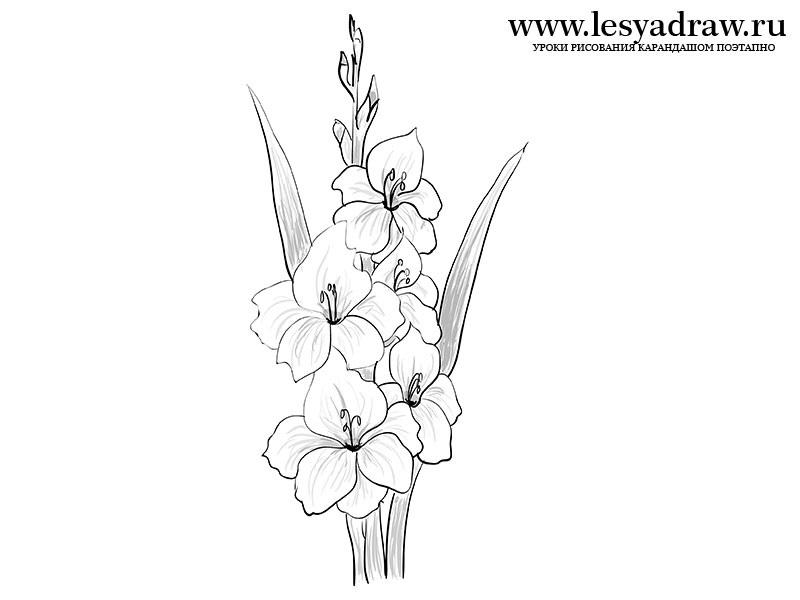 Цветы рисунок для детей карандашом (2)