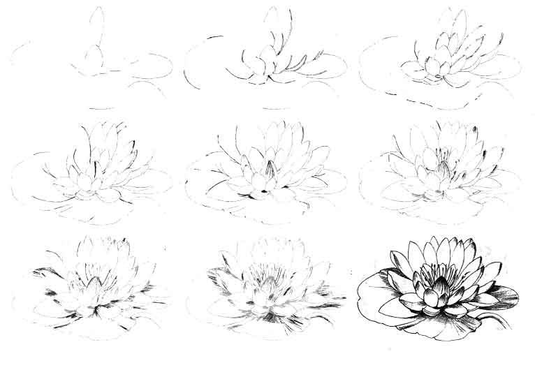 Цветы рисунок для детей карандашом (20)