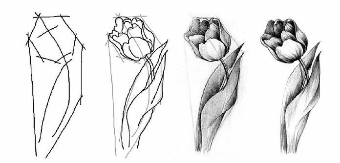 Цветы рисунок для детей карандашом (3)