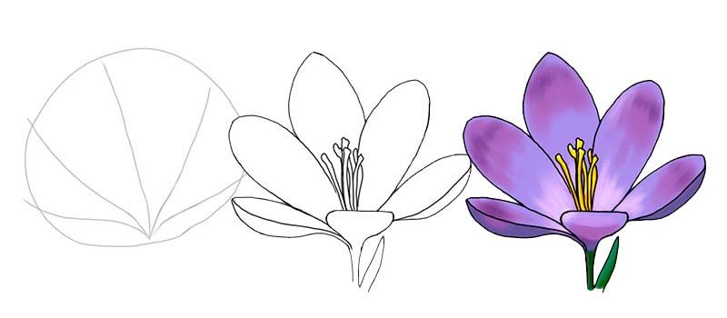 Цветы рисунок для детей карандашом (7)