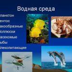 Что такое водная среда обитания?