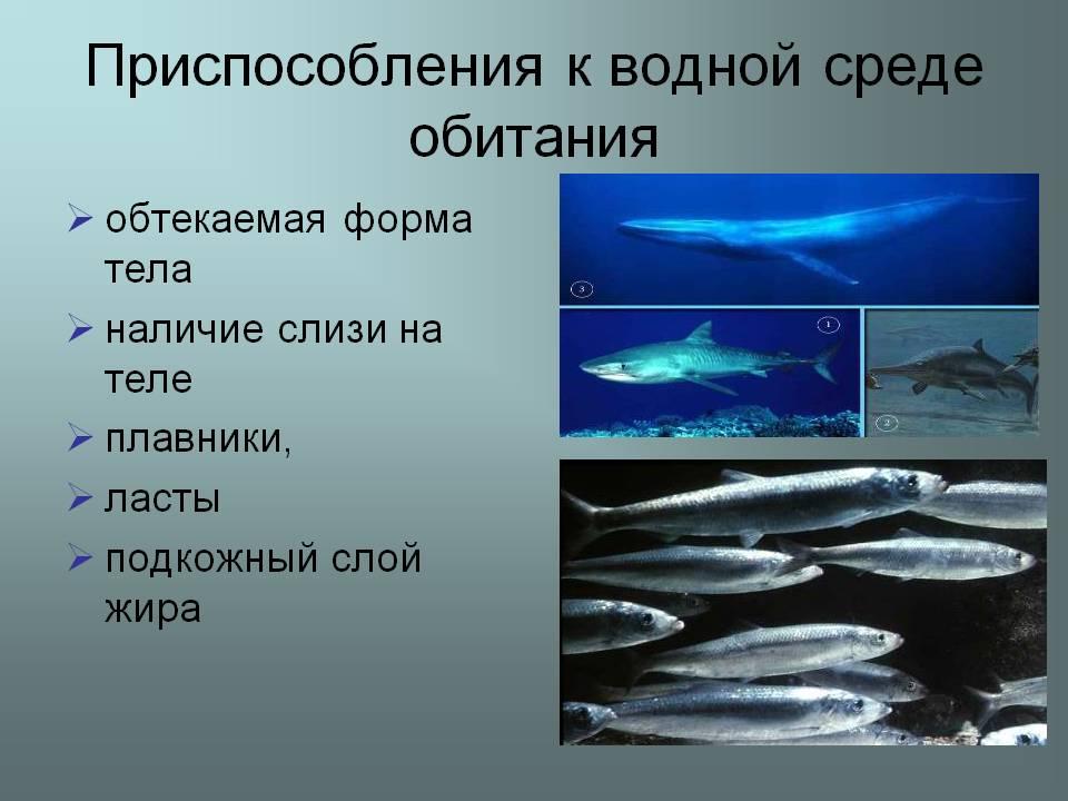 Что такое водная среда обитания 2