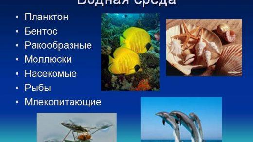 Что такое водная среда обитания