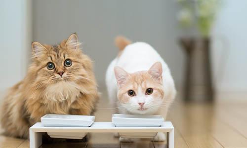 6 советов по кормлению котенка, как кормить котенка влажным и сухим кормом (1)