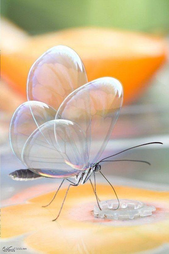 Бабочки с прозрачными крыльями фото (2)