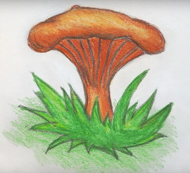 Грибок рисунок для детей (16)