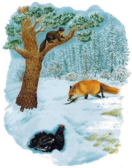 Детский рисунок лиса и тетерев (13)
