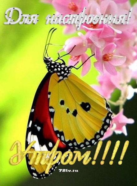 Доброе утро бабочка картинки в лучшем качестве (11)