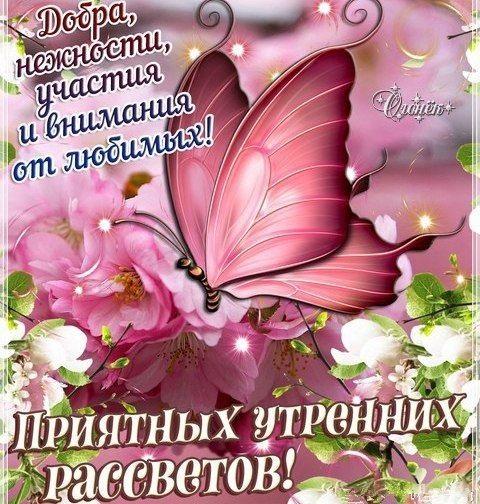 Доброе утро бабочка картинки в лучшем качестве (3)