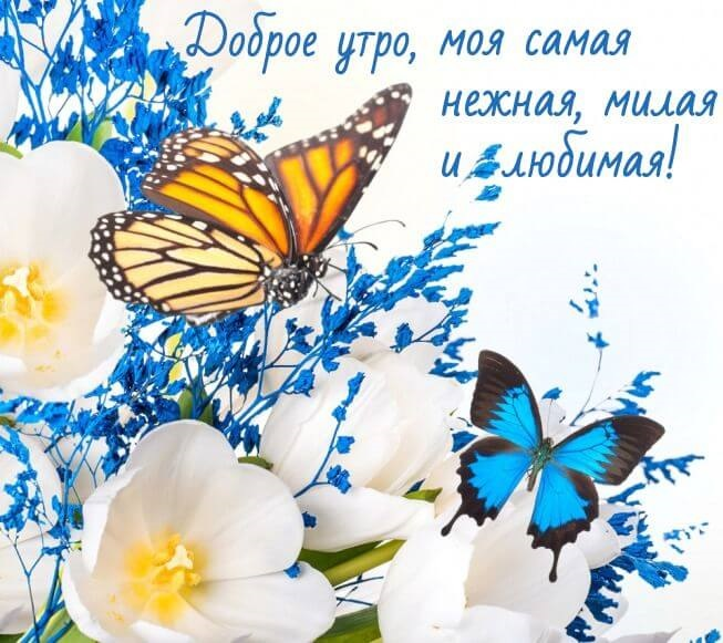 Доброе утро бабочка картинки в лучшем качестве (4)