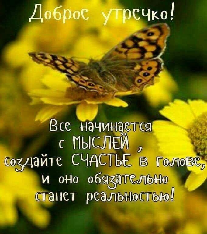 Доброе утро бабочка картинки в лучшем качестве (8)
