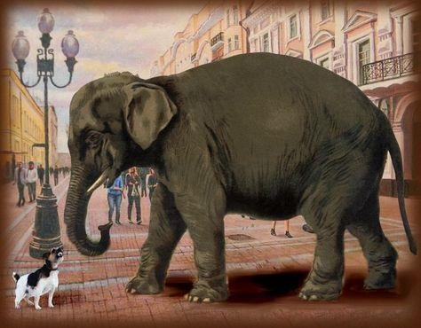 Картинка моська и слон (11)