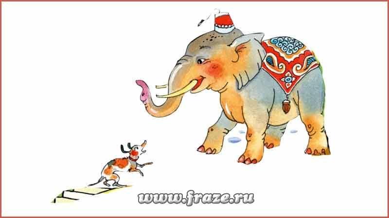 Картинка моська и слон (14)