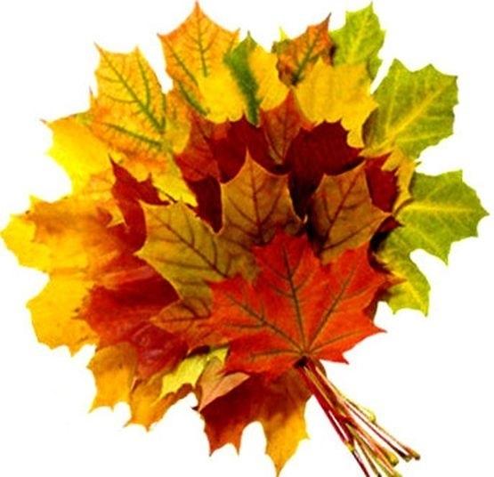 Картинки букет осенних листьев (20)