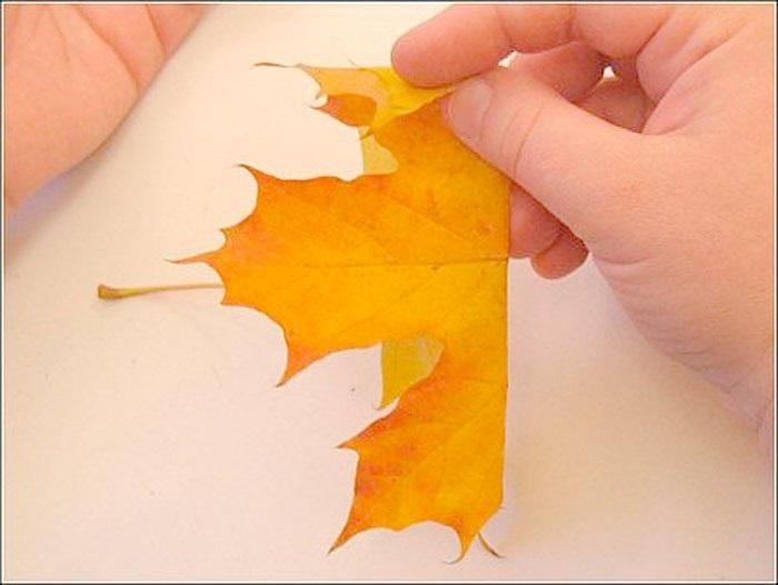 Картинки букет осенних листьев (21)