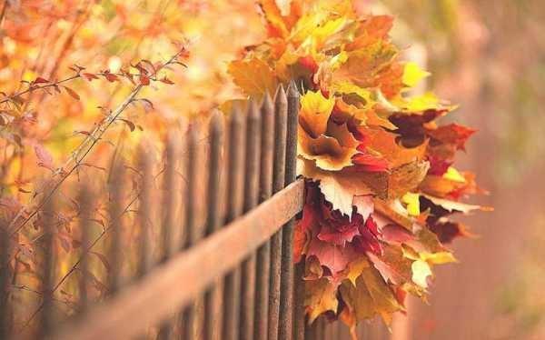 Картинки букет осенних листьев (22)