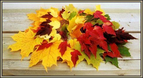 Картинки букет осенних листьев (24)