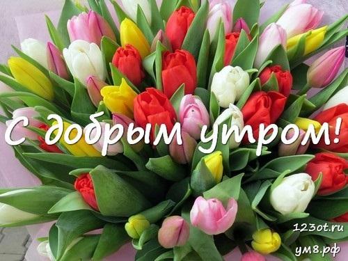 Картинки доброе утро и цветы (15)