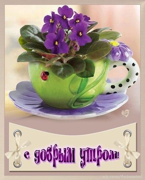Картинки доброе утро и цветы (16)