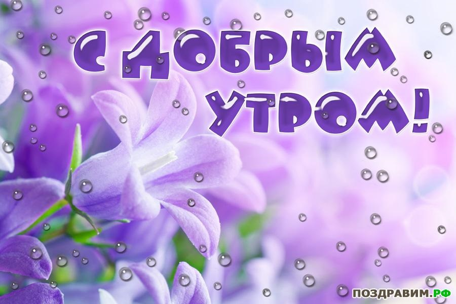 Картинки доброе утро лилии (13)