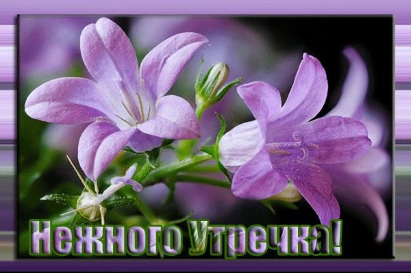 Картинки доброе утро лилии (15)