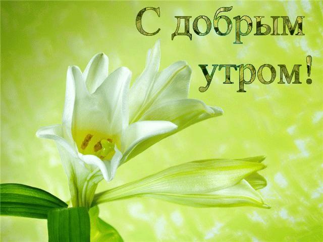 Картинки доброе утро лилии (17)