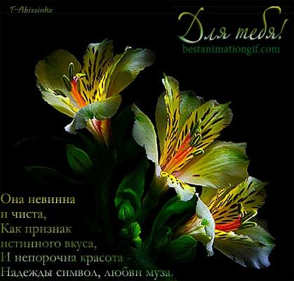 Картинки доброе утро лилии (24)