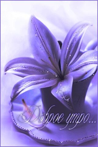 Картинки доброе утро лилии (3)
